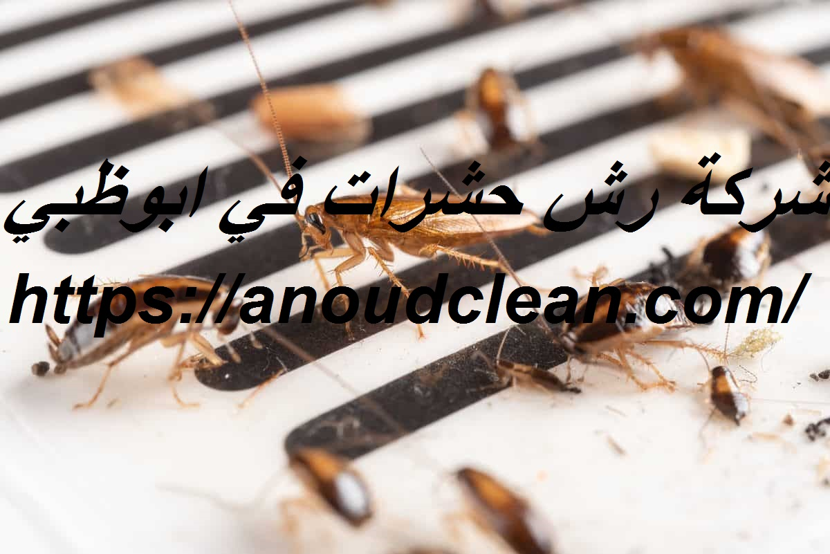 شركة رش حشرات في ابوظبي