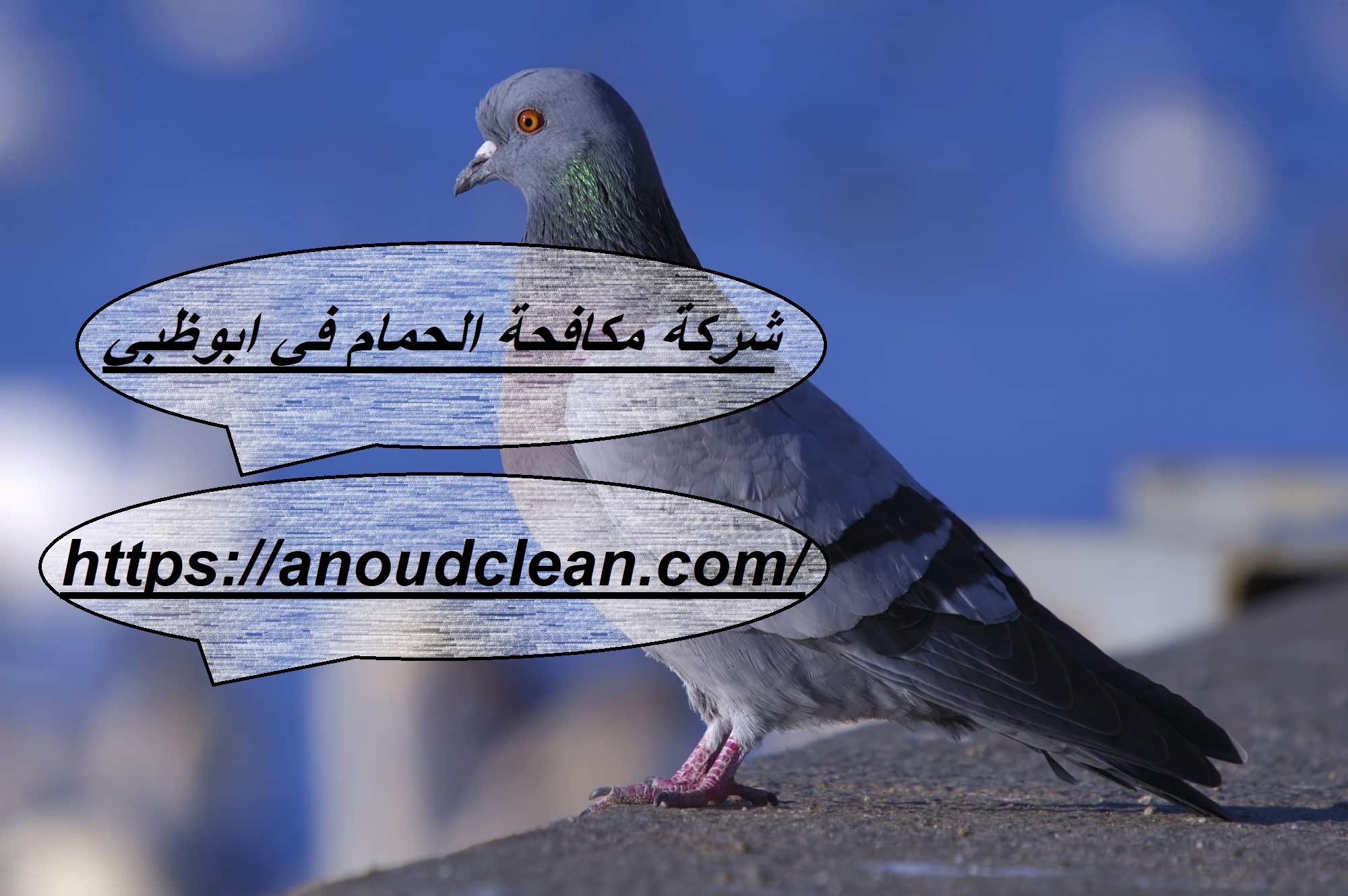 شركة مكافحة الحمام في ابوظبي