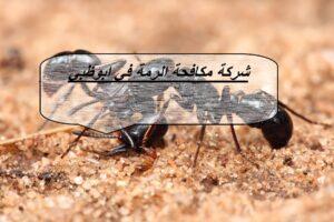 شركة مكافحة الرمة في ابوظبي