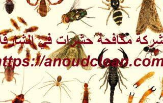 شركة مكافحة حشرات في الشارقة