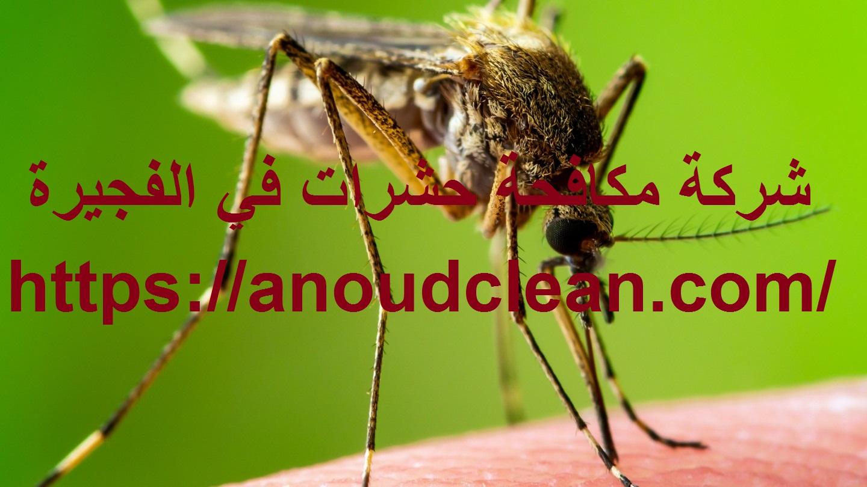 شركة مكافحة حشرات في الفجيرة